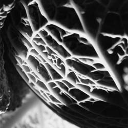 Macro Photography Cabbage